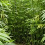 Arkansas industrial hemp farmers concerned they won't be able to plant crops this season
