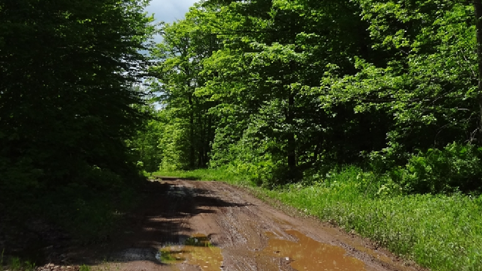 A road on the site of Gogebic Taconite's proposed mine in northwestern Wisconsin. (WLUK/Don Steffens, file)