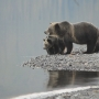 Should grizzly bears be returned to the North Cascades?