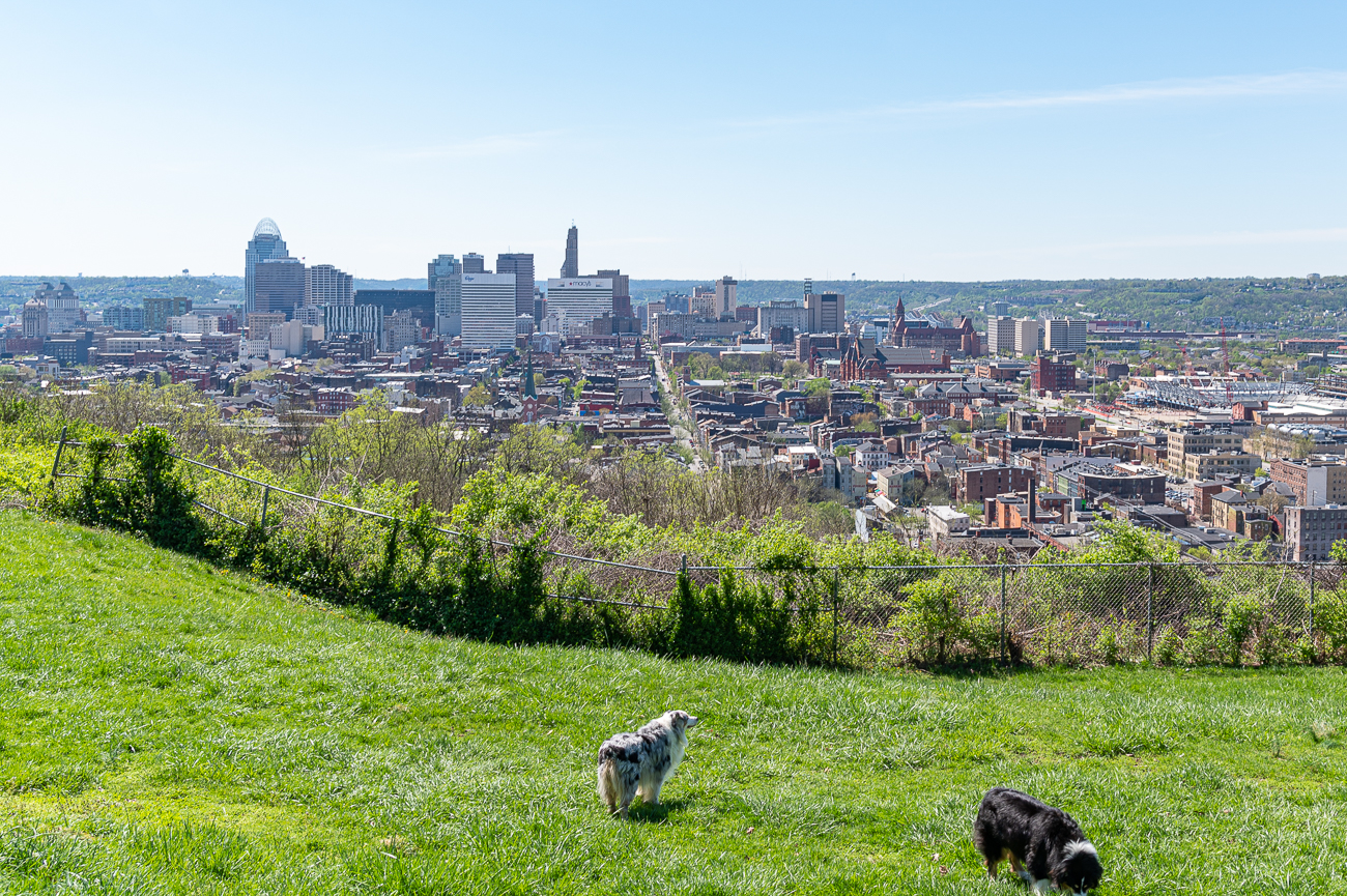 View #4: Bellevue Hill Park (CUF) / Bellevue Park in CUF has a phenomenal view of Cincinnati from the north. The best reason to seek out this particular perspective over the others is because of the unique perspective it has on the density of Over-the-Rhine. / Image: Phil Armstrong // Published: 4.24.20
