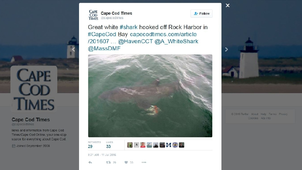 boy reels in great white shark while fishing off cape cod
