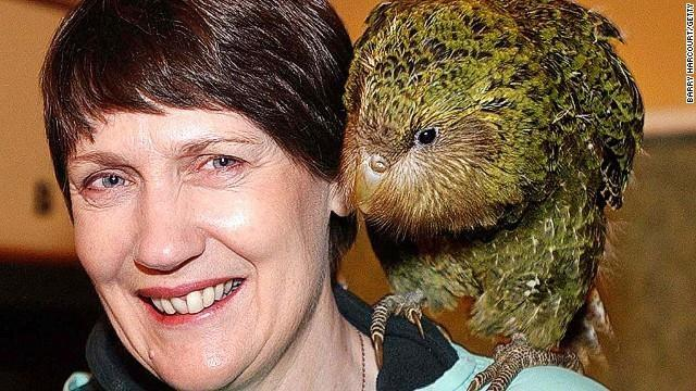 On the right you'll notice a somewhat ugly bird named the kakapo, a critically endangered parrot. It's the only flightless parrot in the world and has very muscular thighs, according to the British Science Association.