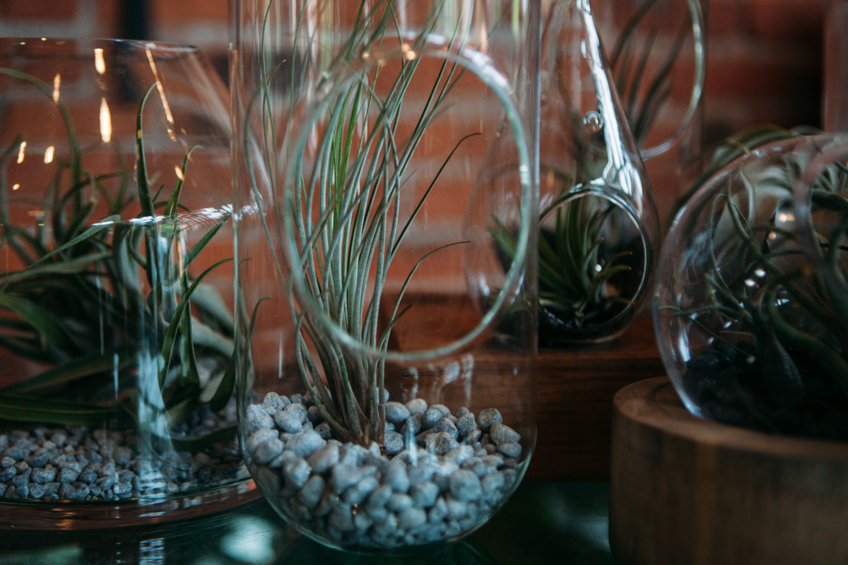 Succulent plants store water within themselves, making them super easy to care for, and last much longer than any tulips, daisies or roses will. (Image: Joshua Lewis / Seaettle Refined)