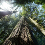 Timber companies sue over expansion of Oregon monument