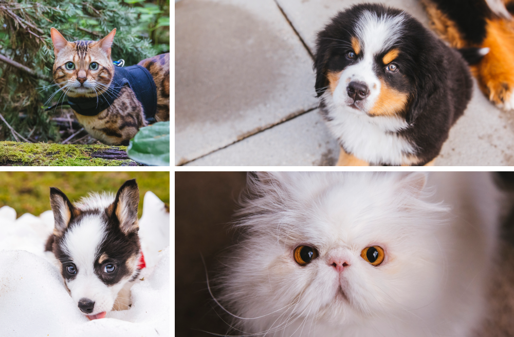 Cuteness Overload: We met a lot of cute animals in 2019