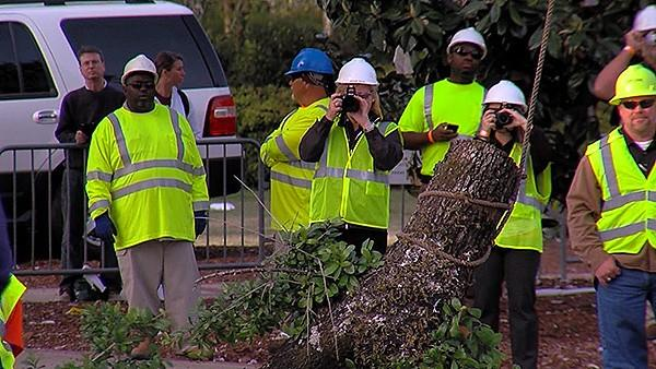 Workers snap pictures of the first branches being lowered to the ground