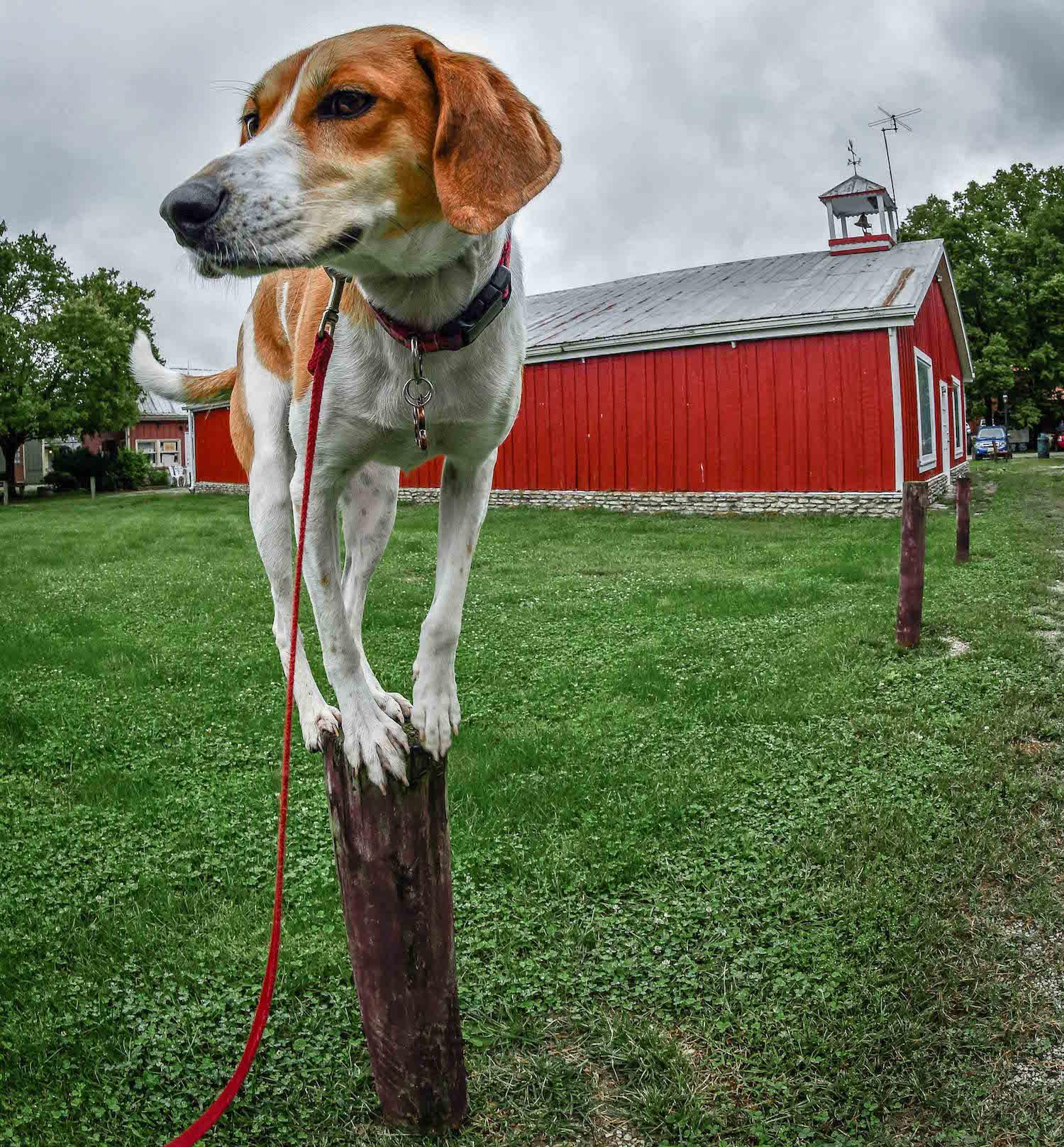 LOCATION: Metamora, Indiana / Mollie is a local Instagram celebrity. Famous for posing on fire hydrants in front of ArtWorks murals (and other Cincy landmarks), this hound dog has officially stolen our hearts. You can follow her adventures on Instagram @molliethehounddoggie / Image: Patti Mossey (Mollie's owner and #1 fan) // Published: 5.1.18