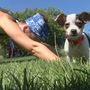 Downward dogs help real dogs in need at local canine rescue